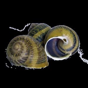 Le Crusole - Les escargots de Malicorne - GERS